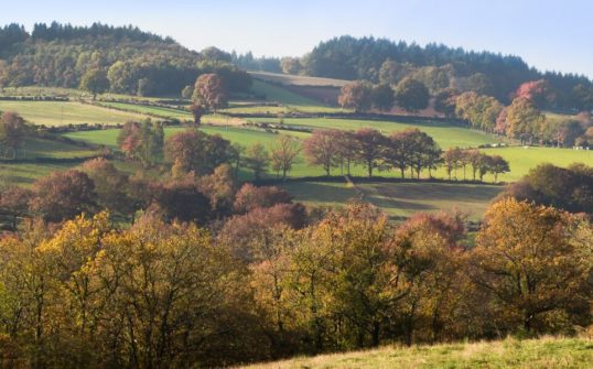 Vue panoramique d'un paysage bocager
