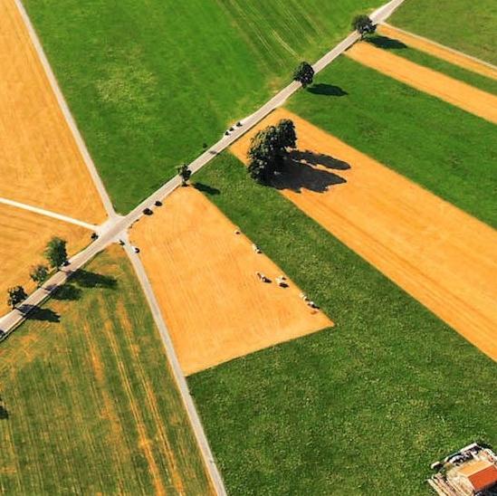 Des parcelles agricoles vertes et jaunes