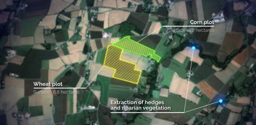 Crop inventory : identification of two lots, corn in green, wheat in yellow