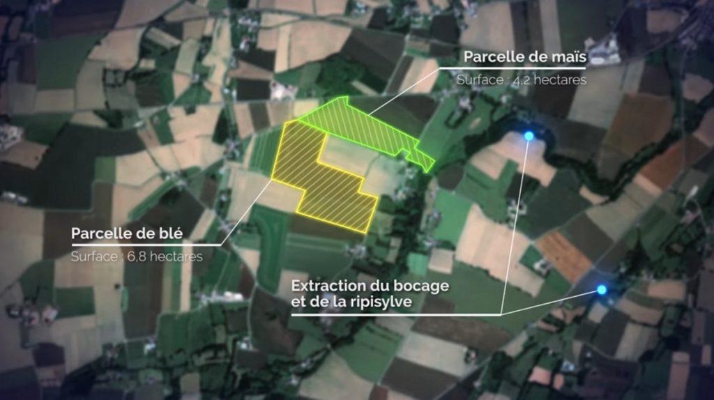 Inventaire des cultures : identification de deux parcelles, maïs en vert, blé en jaune